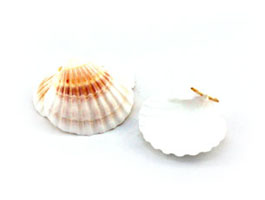 Set of 25 Scallop Shells / Place Card Holders