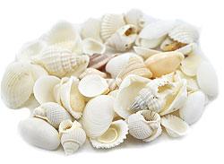 Shell decorations 09 - 1 kilo mixed