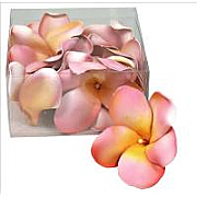 Floating Flowers 02 - set of 12, 7cm wide frangipanis