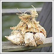 Shell decorations 10 - 30 items