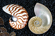 Shell decorations 01