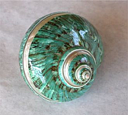 Shell decorations 04