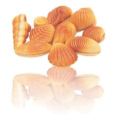 Chocolate Sea Shells Belgian chocolates (Box of 85)