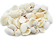 Shell decorations 09 - 1 kilo mixed