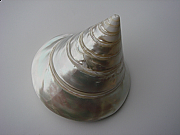 Shell decorations 05